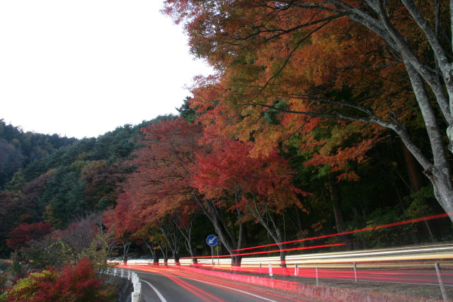 20051112_05_momiji.jpg