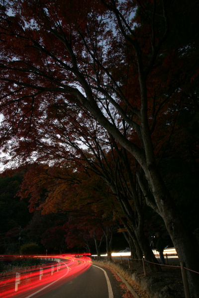 20051112_06_momiji.jpg