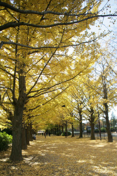 20051119_06_namiki.jpg