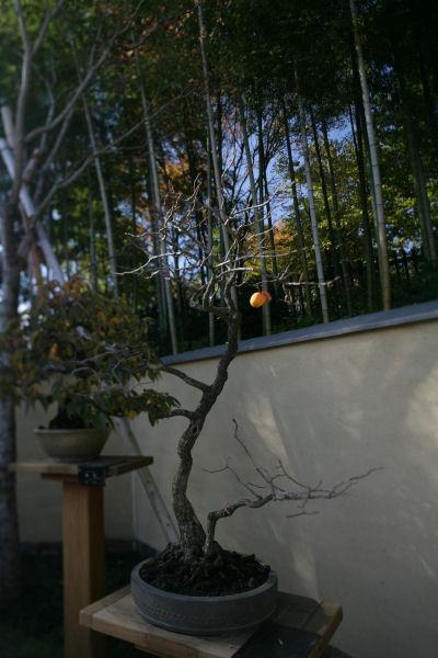 20051119_14_bonsai.jpg