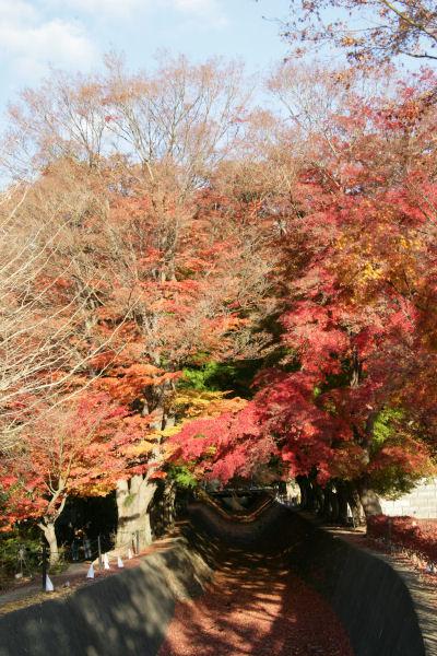 20051120_11_kairo.jpg