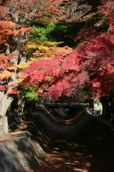 20051120_12_kairo.jpg