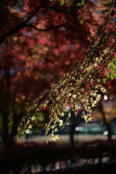 20051120_13_kairo.jpg