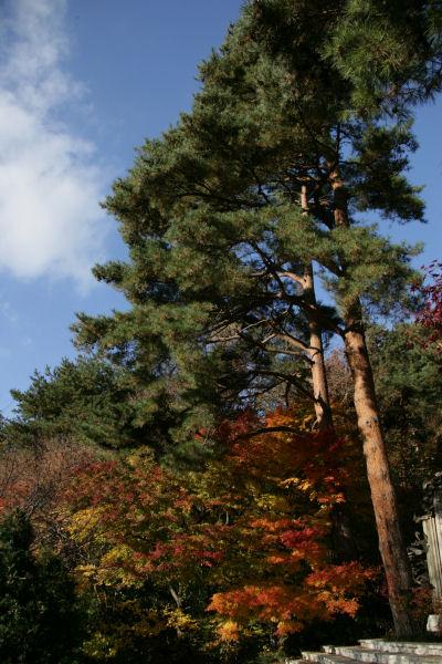 20051120_16_ittiku.jpg