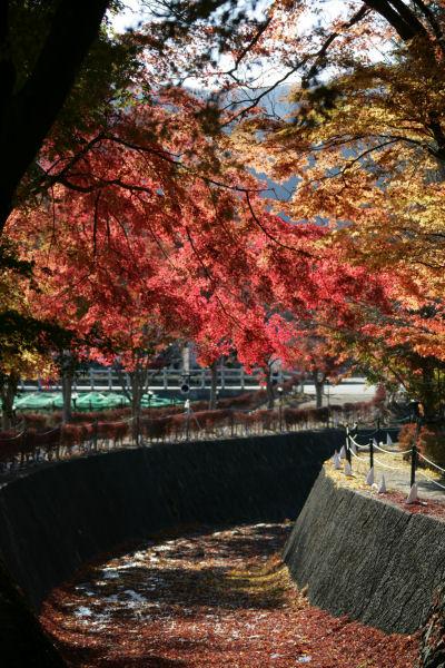 20051120_17_kairo.jpg