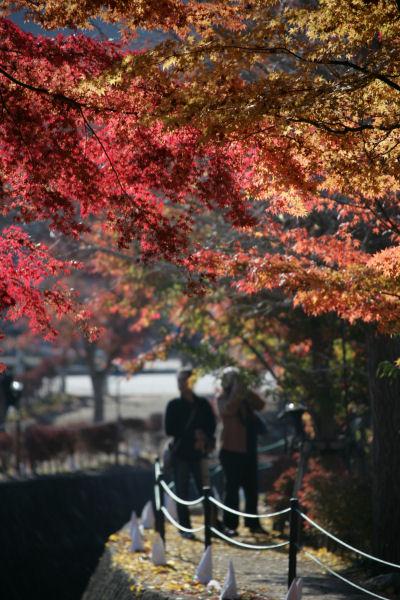 20051120_18_kairo.jpg