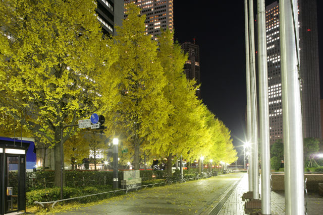 20051210_17_ichou.jpg