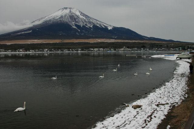 20060104_07_swan.jpg