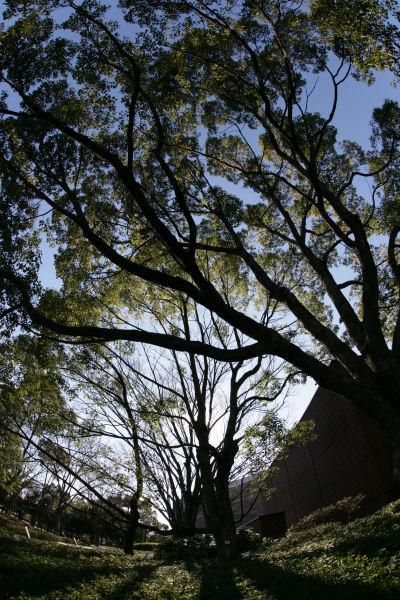 20060108_25_kenbi.jpg