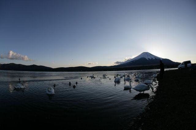 20060205_13_swan.jpg