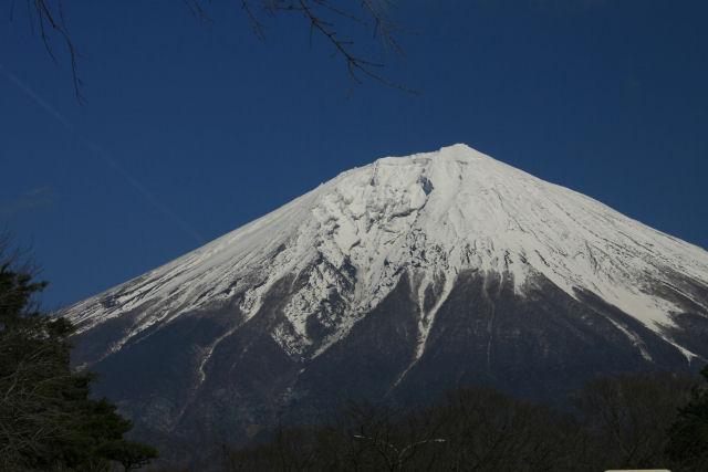 20060218_27_fukizakura.jpg