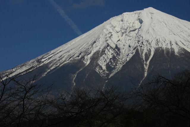 20060218_31_fukizakura.jpg