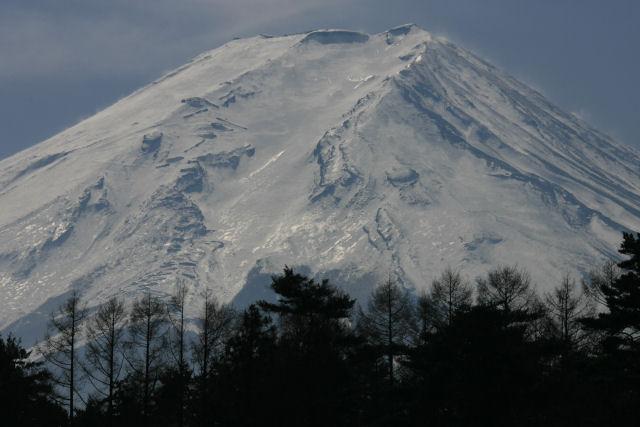 20060222_13_pine.jpg