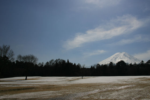 20060222_14_pine.jpg