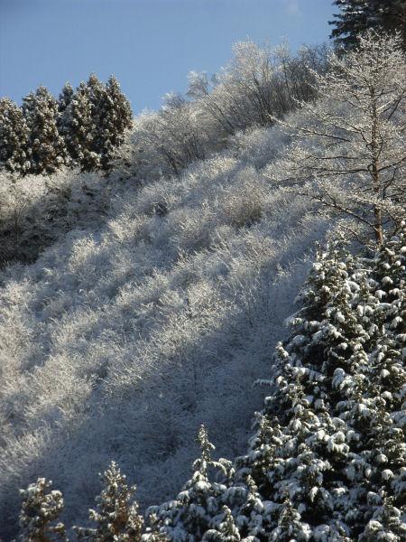 20060304_03_snow.jpg