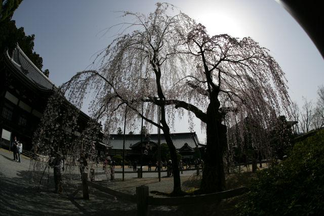 20060401_12_minobu.jpg