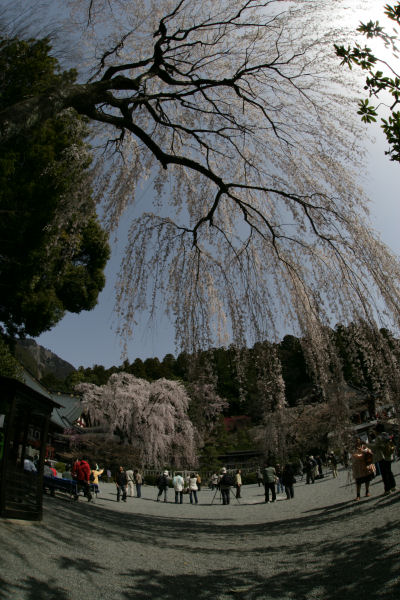 20060401_14_minobu.jpg