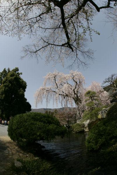 20060401_18_minobu.jpg