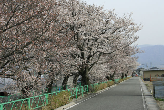 20060401_27_yamabushi.jpg