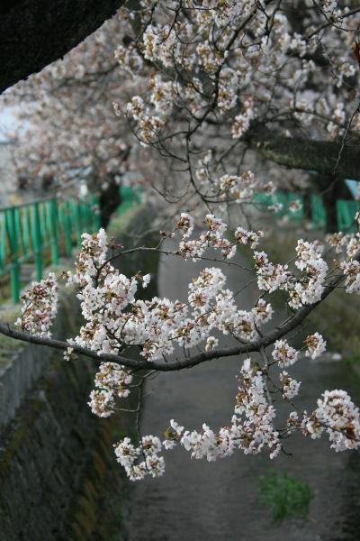 20060401_28_yamabushi.jpg
