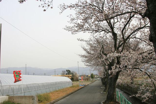 20060401_29_yamabushi.jpg