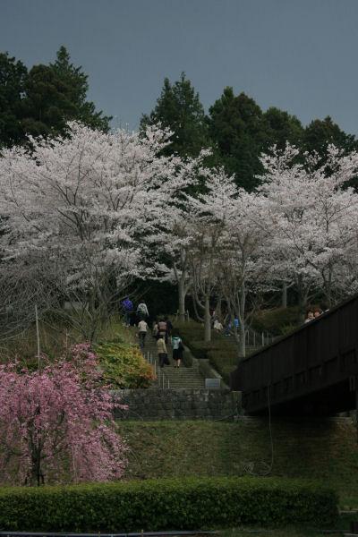 20060408_05_fudoki.jpg