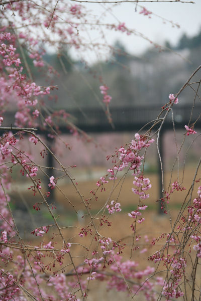 20060408_07_fudoki.jpg