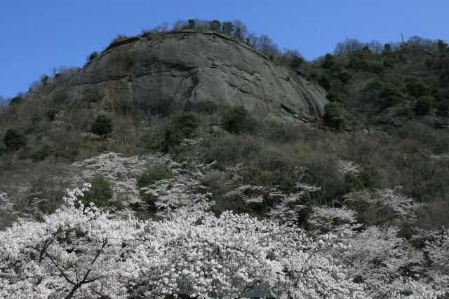 20060409_11_iwadono.jpg