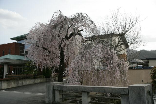 20060409_13_yamura.jpg