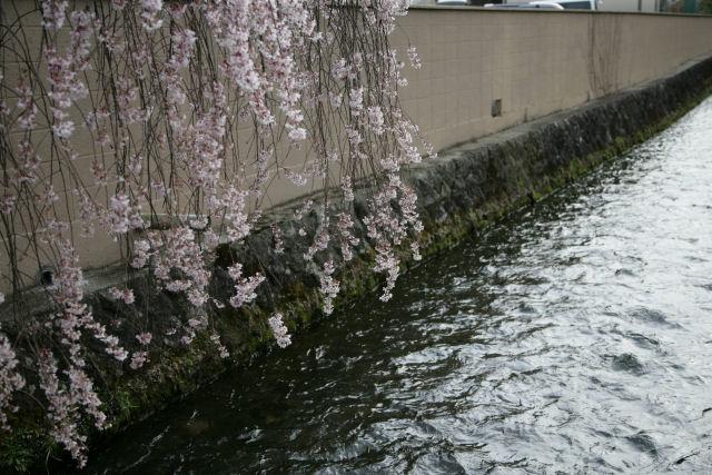 20060409_15_yamura.jpg