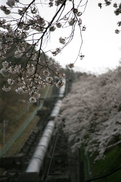 20060409_17_shishidome.jpg