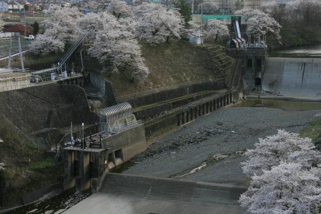 20060409_27_kawamo.jpg