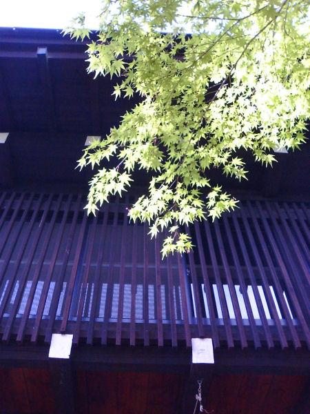 20060505_04_sobamaru.jpg