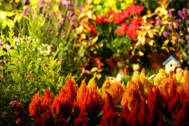 20060701_08_garden.jpg