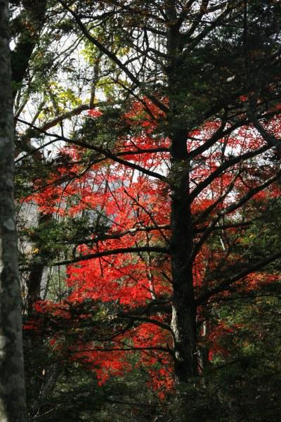 20061104_36_tsusenkyo.jpg