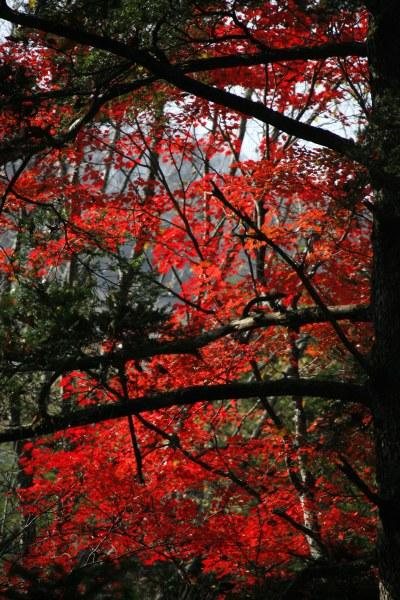 20061104_37_tsusenkyo.jpg