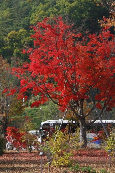 20061104_45_mizugakiko.jpg