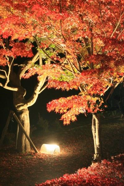 20061104_52_shzukani.jpg