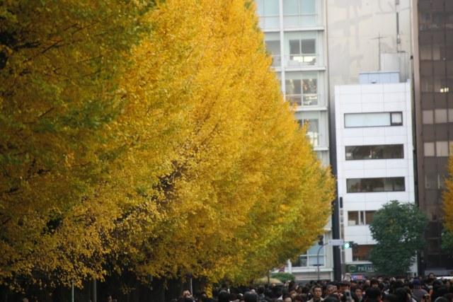 20061203_01_gaien.jpg