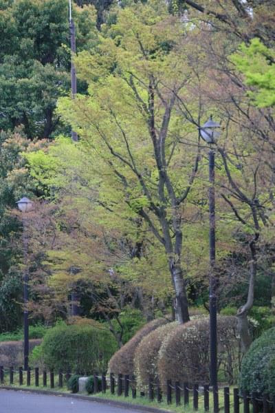 20070331_25_kitanomaru.jpg