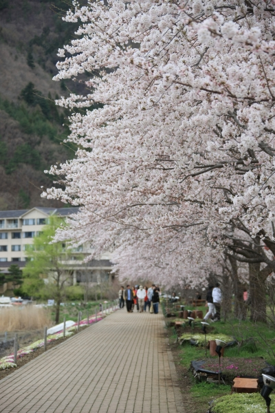 20080419_30_kawaguchi.jpg