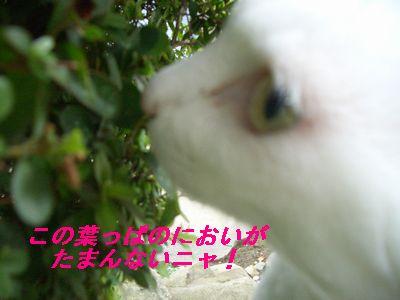 この葉っぱ・・・