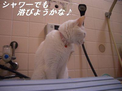 シャワーでも