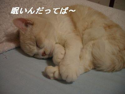 眠いんだって~