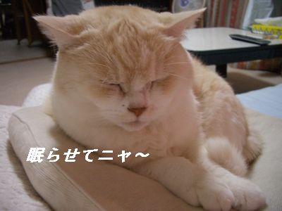 眠らせてニャ~