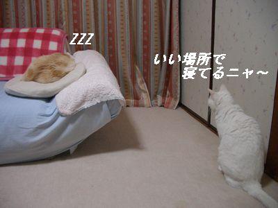 いい場所で寝てるニャ~