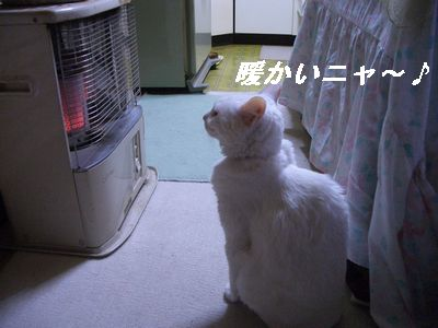 暖かいニャ~♪