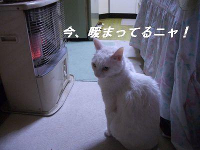 今、暖まってるニャ!