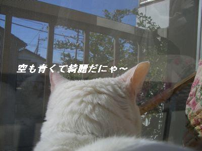 空も青くてきれいだにゃ~