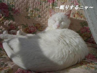 一眠りするニャ~